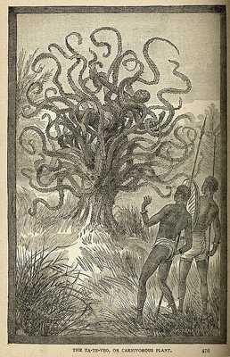 Топ-10: мифические существа, реальность которых была опровергнута