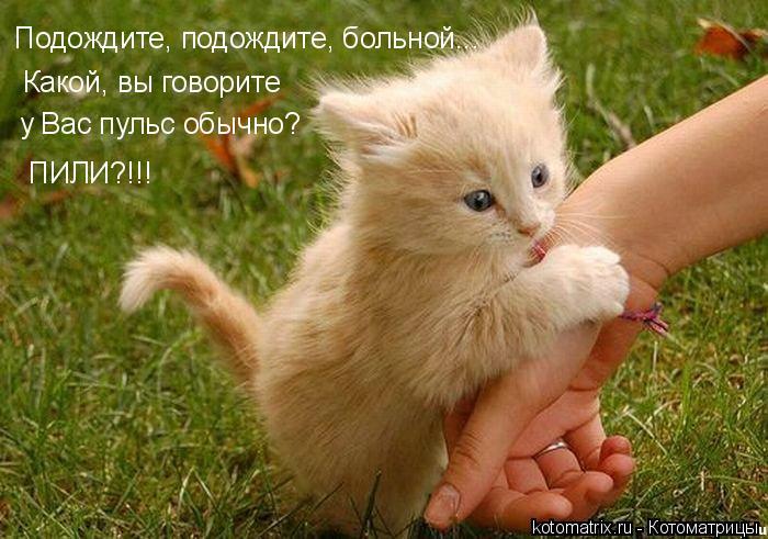http://www.bugaga.ru/uploads/posts/2012-03/1332162010_kotomatrix-02.jpg