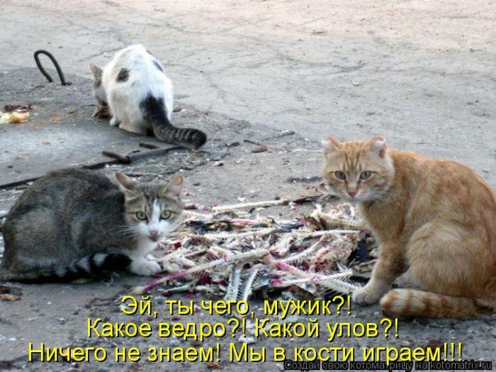 http://www.bugaga.ru/uploads/posts/2012-03/1332490379_17.jpg