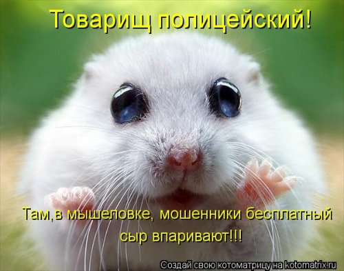 http://www.bugaga.ru/uploads/posts/2012-03/thumbs/1330692096_kotomatrix_03.jpg