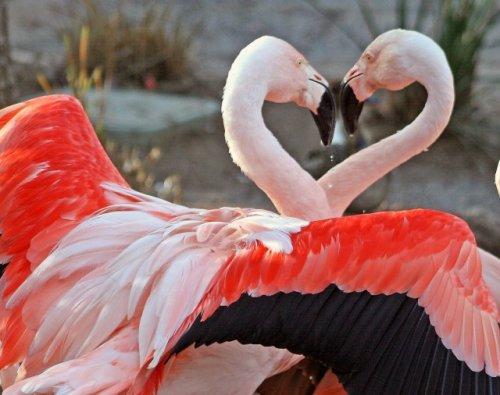 Животный мир в любви