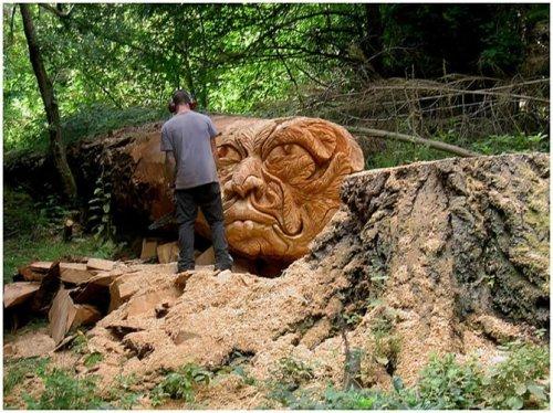 Вторая жизнь срубленных деревьев