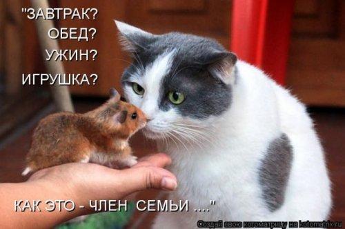 Котоматрица 1330940338_21