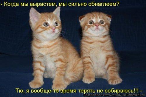 Котоматрица 1330940354_13