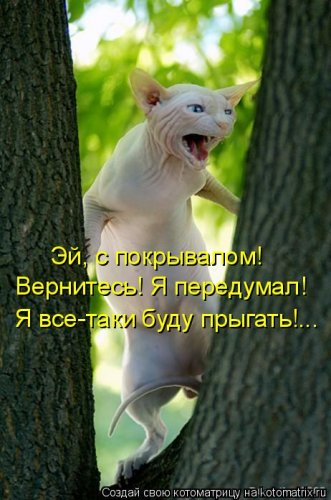 http://www.bugaga.ru/uploads/posts/2012-03/thumbs/1330960095_kotomatrix_09.jpg