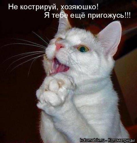 http://www.bugaga.ru/uploads/posts/2012-03/thumbs/1330960108_kotomatrix_42.jpg