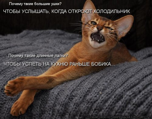 http://www.bugaga.ru/uploads/posts/2012-03/thumbs/1330960109_kotomatrix_06.jpg