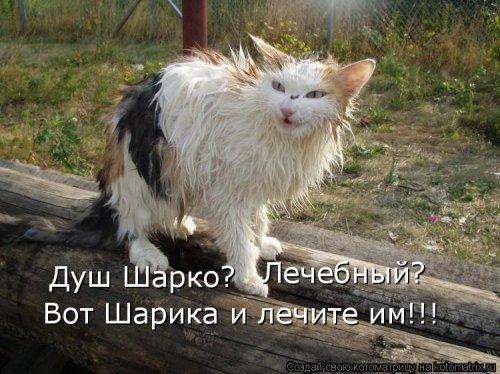 http://www.bugaga.ru/uploads/posts/2012-03/thumbs/1330960130_kotomatrix_38.jpg