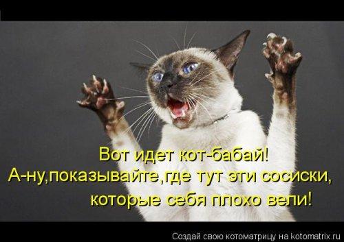 Забавная котоматрица (45 фото)