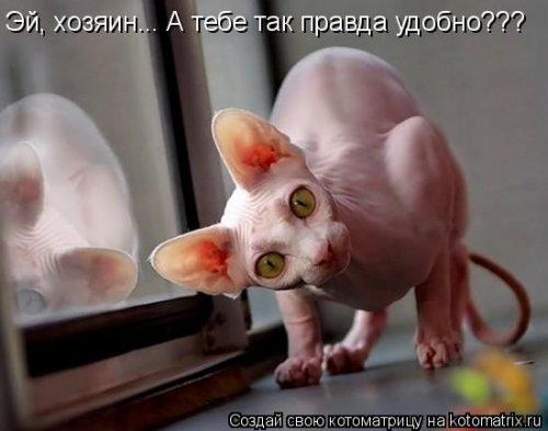 http://www.bugaga.ru/uploads/posts/2012-03/thumbs/1330960161_kotomatrix_22.jpg