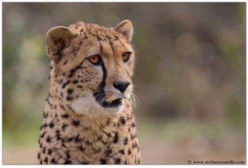 Фотографии животных от Стефано Ронки