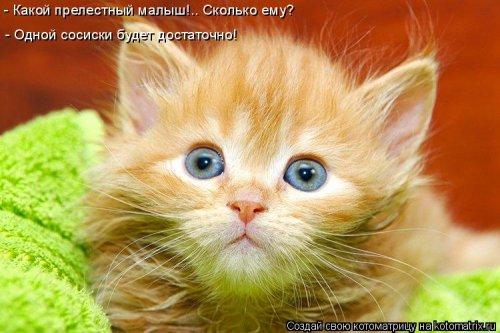 Веселая котоматрица (37 фото)