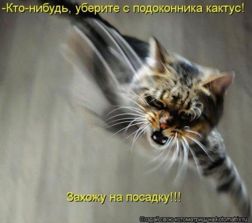 Лучшие котоматрицы недели (28 фото)