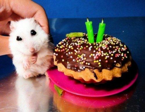 Вечеринки у животных
