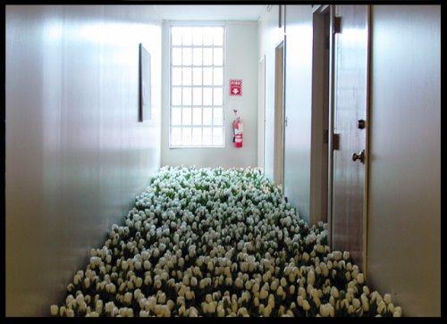 Инсталляция Bloom от Анны Шулайт
