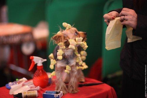 Ежегодная выставка собак Crufts