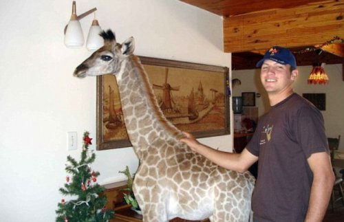 Домашний жираф по кличке Финни