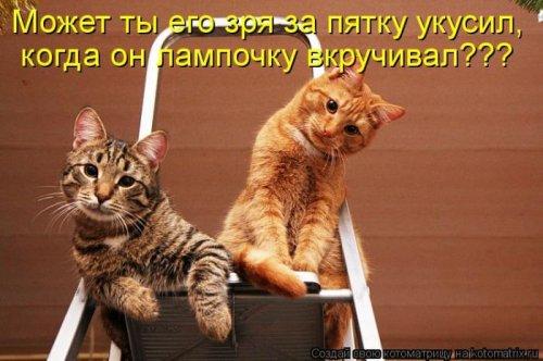 Лучшие котоматрицы недели (28 шт)