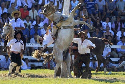 Укрощение необъезженных лошадей