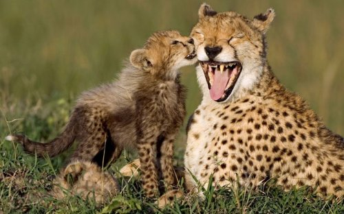 Животные в фотографиях (15 фото)