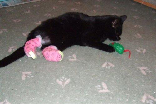 Кот с протезами