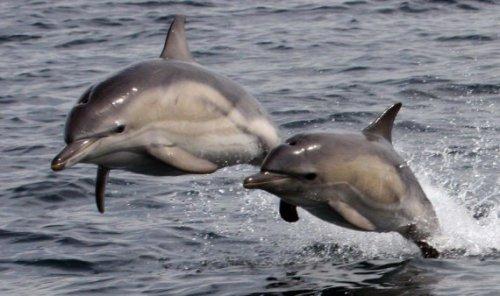 Топ-10: лучшие места, где можно встретить китов