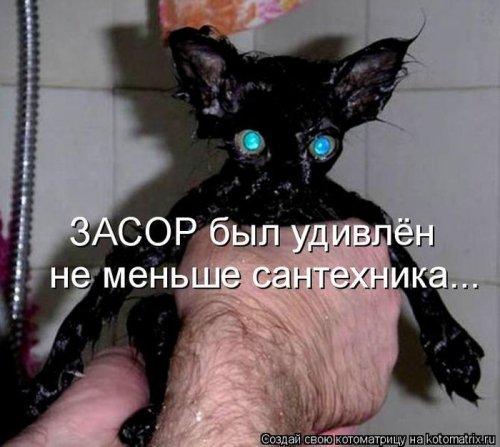 Лучшие котоматрицы недели (30 шт)