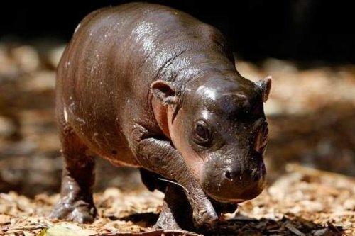 9 миниатюрных животных