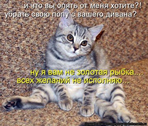 Котоматрица юморная (38 фото)