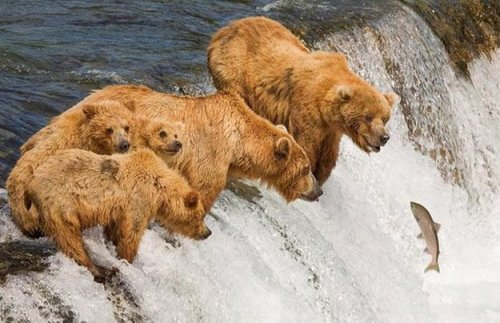 Удивительные фото животных