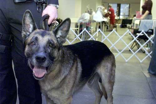 Топ-10: самые смелые собаки