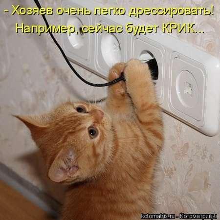 Смешная котоматрица (29 фото)