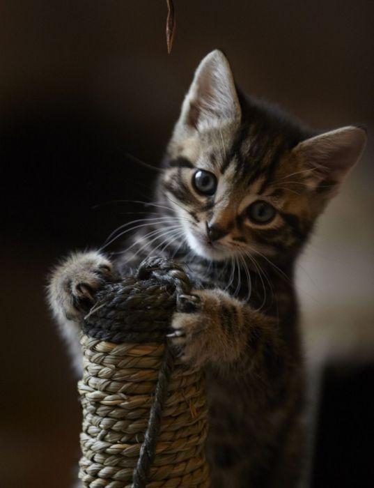 фото котят фото смотреть