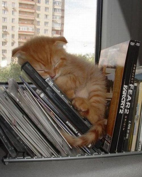 Котэ спят в самых странных позах