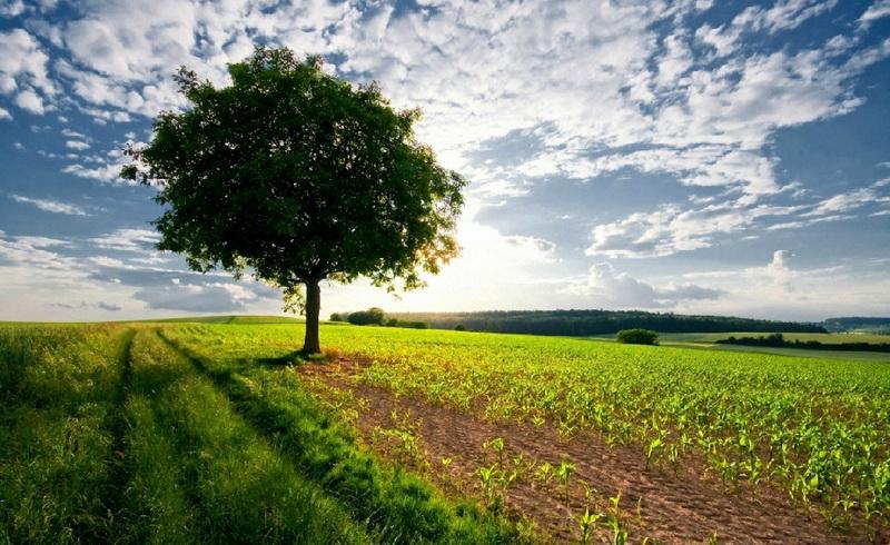 Картинки по запросу поле и дерево