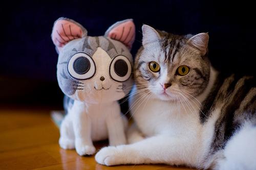 Животные и игрушки - их копии