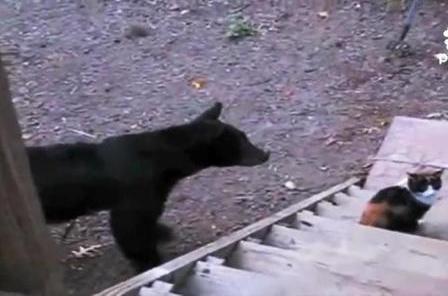 Кот прогоняет группу медведей