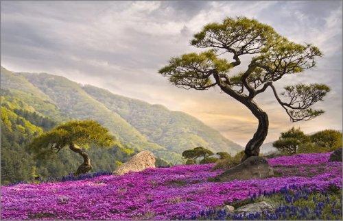 Удивительные пейзажи (27 фото)
