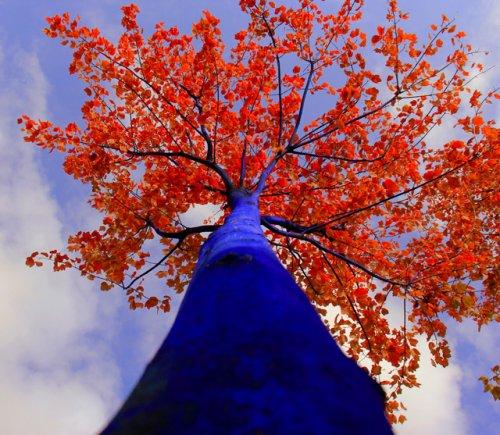 Синие деревья Константина Димопулоса