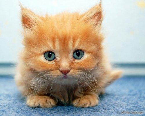 Смотреть котят (40 фото)
