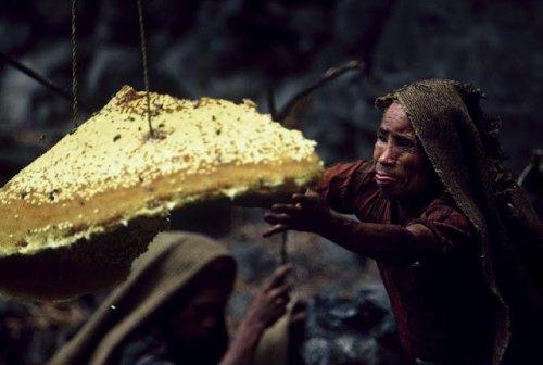 Как добывают мед в Непале