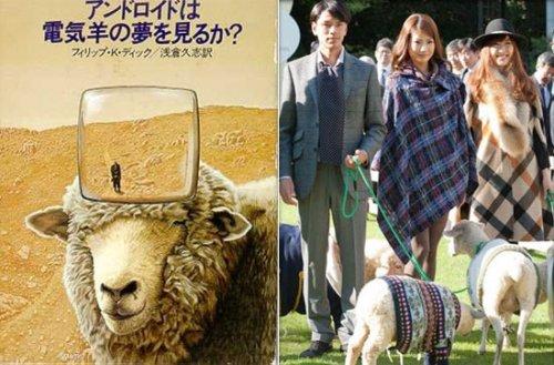 Отель для овец