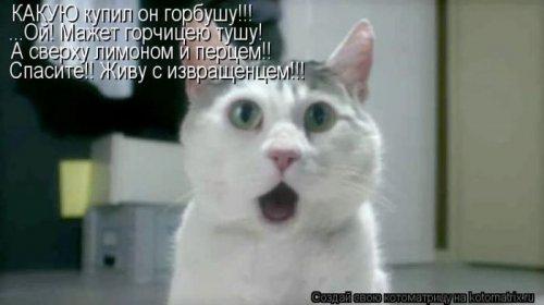 Лучшие котоматрицы недели (35 фото)