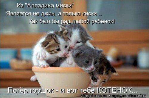 Свежая котоматрица (25 фото)