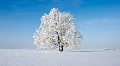 Одинокие деревья в поле