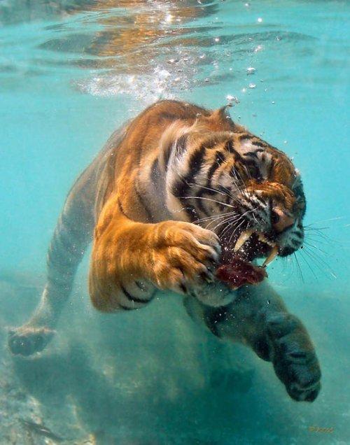 Удачные фотографии животных
