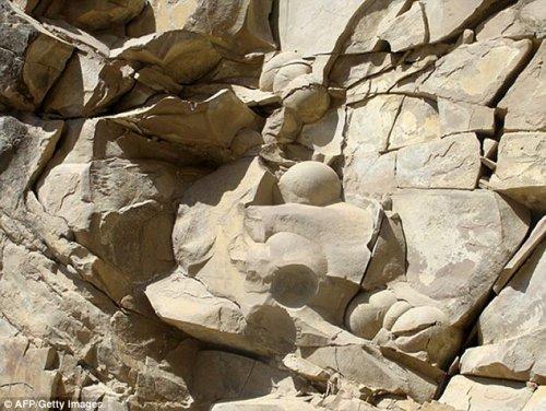 Геологи Чечни обнаружили древние яйца динозавров