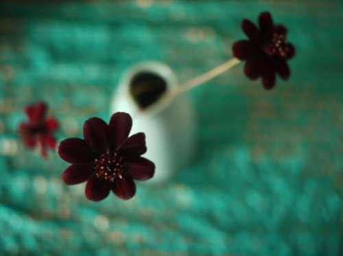 Топ-10: Самые редкие цветы в мире