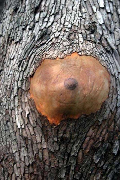 Приколы с деревьями