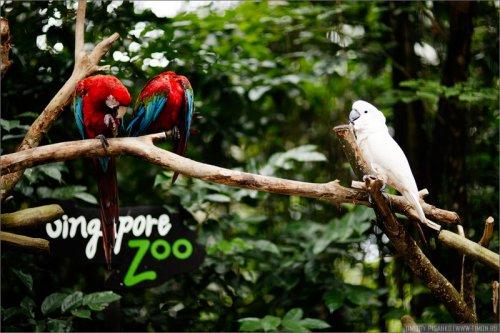 Открытый зоопарк в Сингапуре